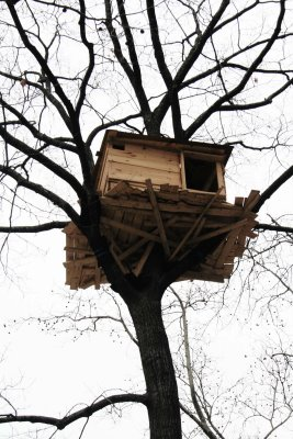 Tree house front