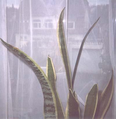 Pflanze1_3