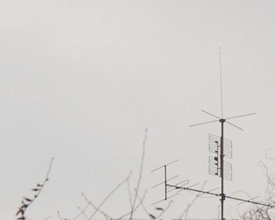 Antennezweige