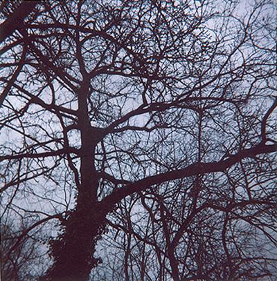 Baum_3